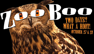 ZooBoo owl picture